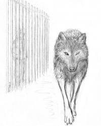 l'oeil du loup A_extrait_1